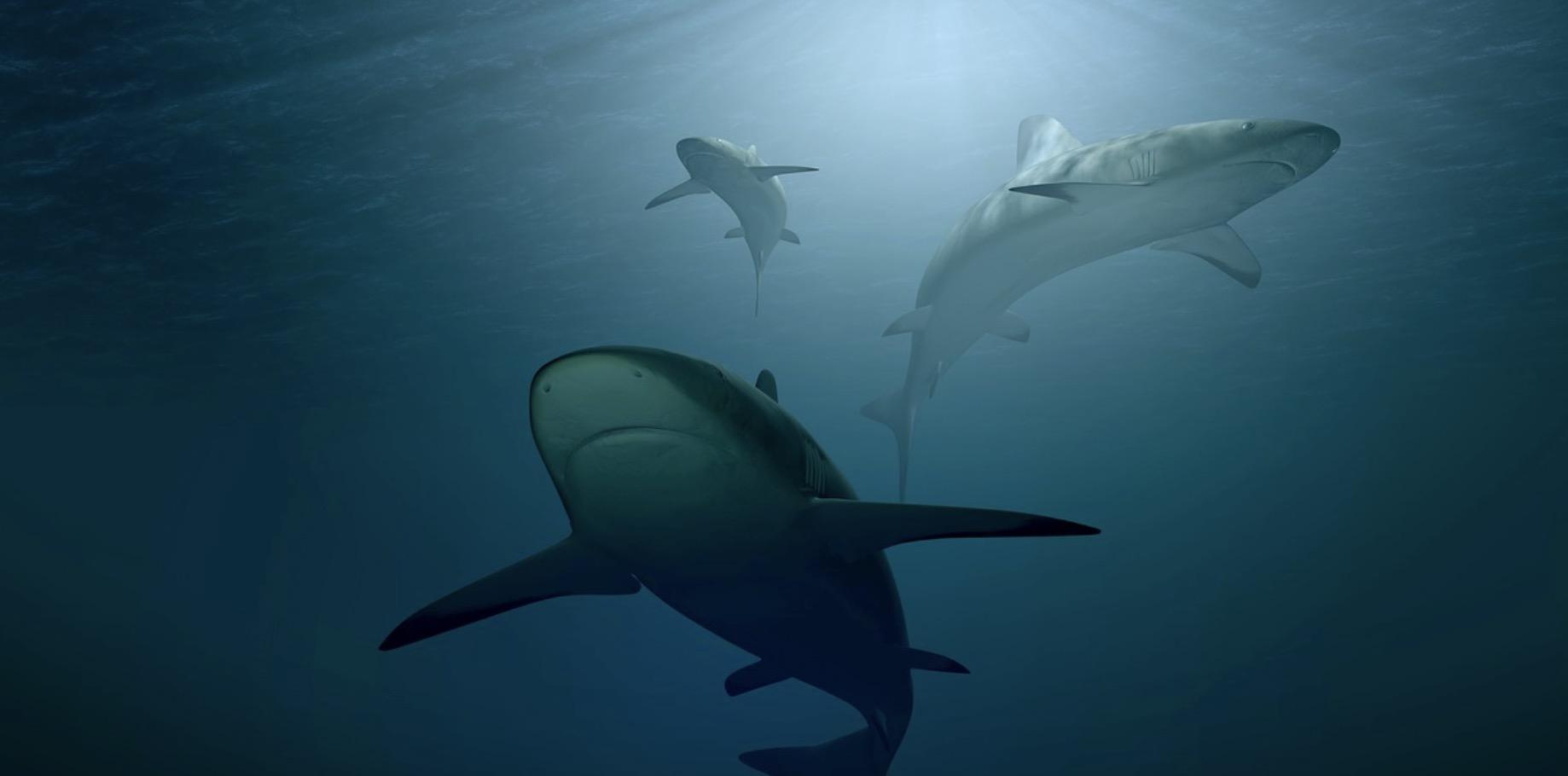 Existe-t-il des requins mangeurs d'hommes ?