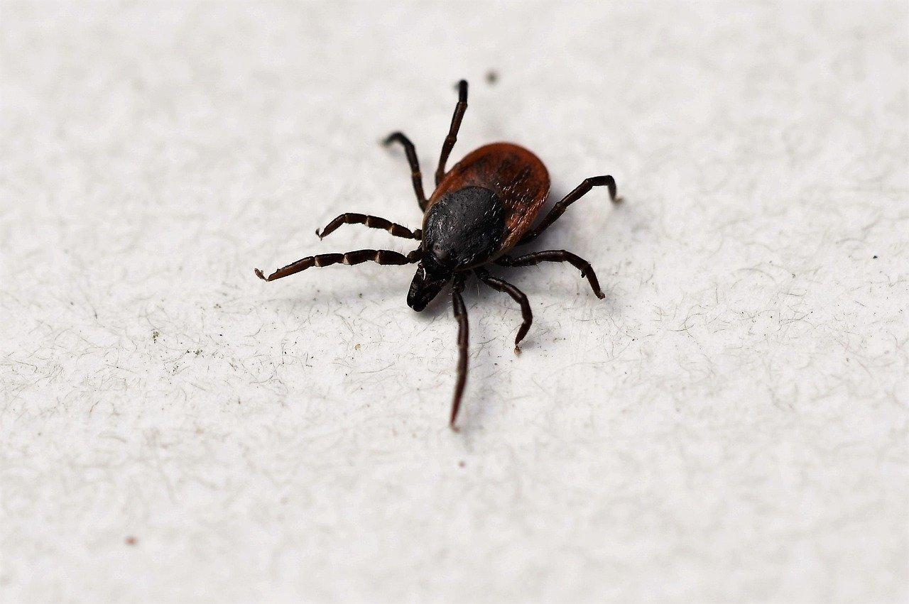 Tout savoir sur la maladie de Lyme : causes, symptômes, traitement, prévention