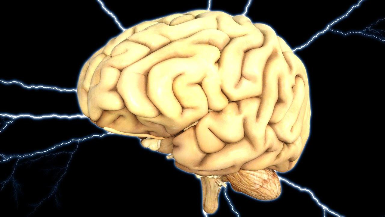 Incroyable, nous avons des poils dans le cerveau ! - Ça m'intéresse