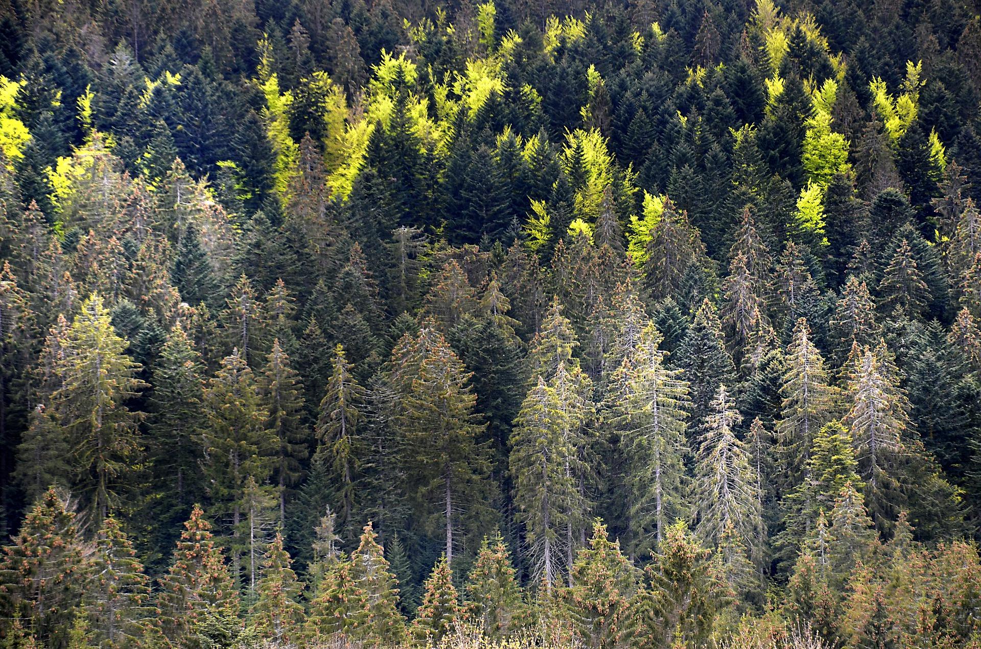 Sécheresse : les forêts en danger