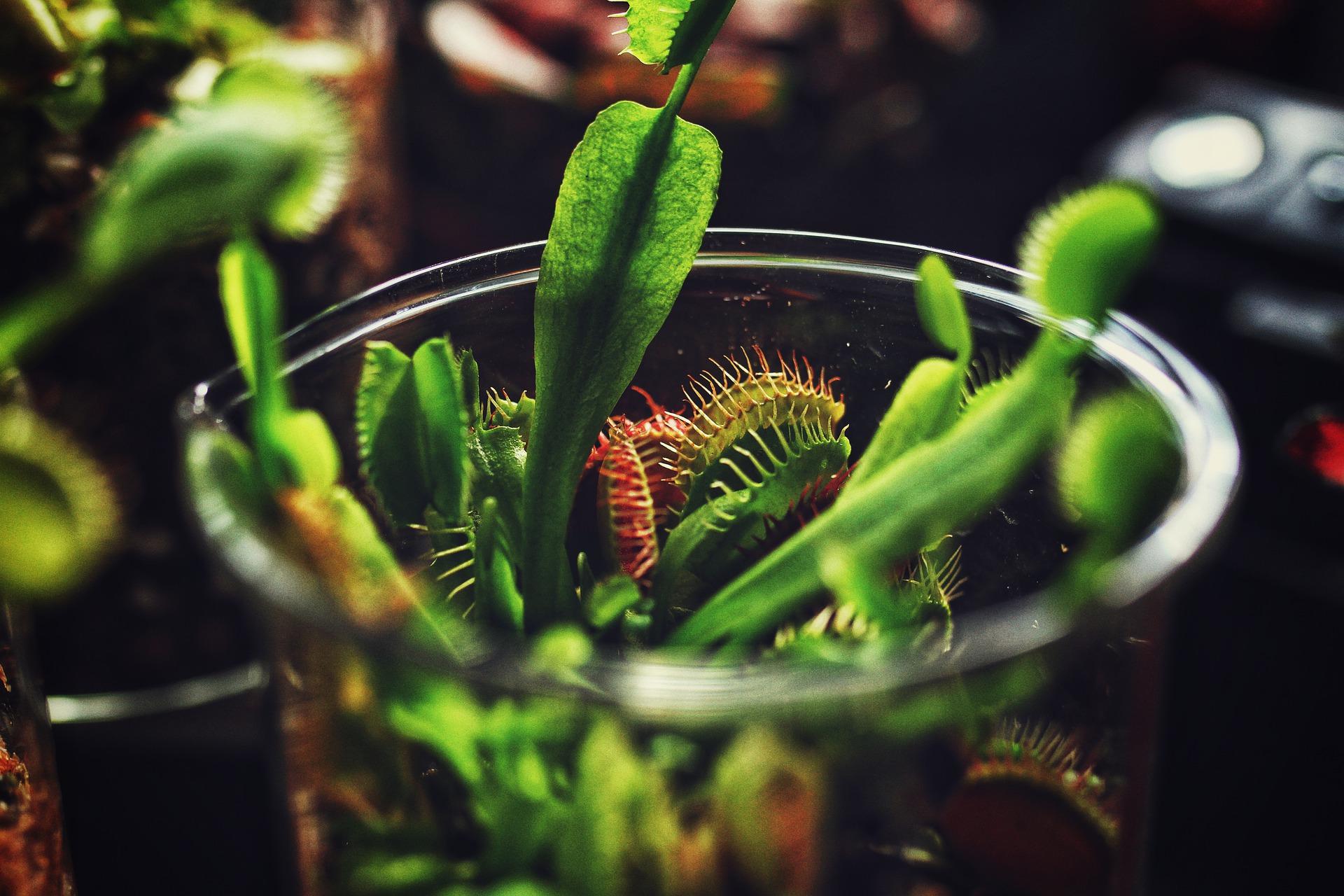 Communiquer avec les plantes pour détecter leurs maladies