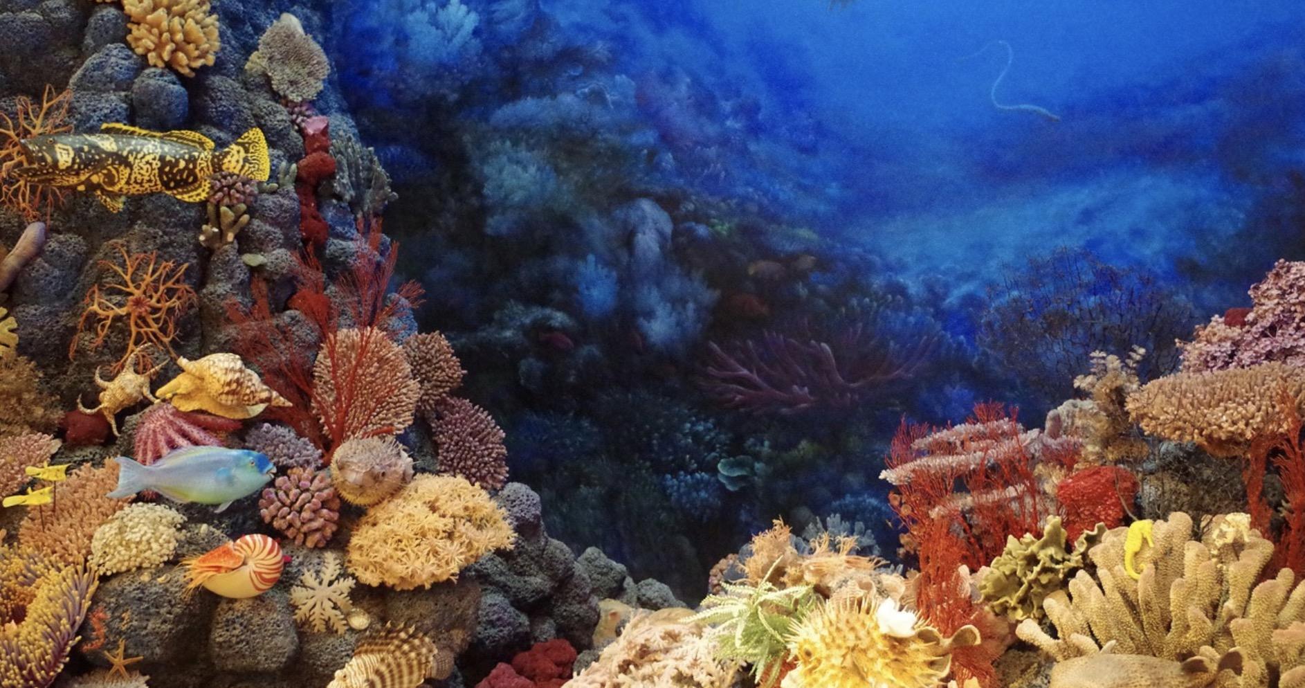 Quand le corail fait de la résistance