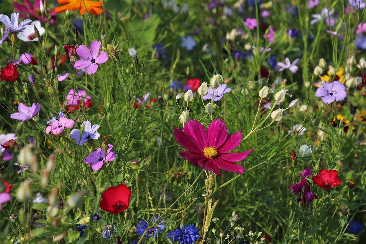 Comment réduire son impact écologique dans son jardin ?