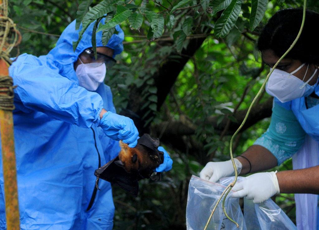 Nipah, le virus qui fait craindre une épidémie en Inde - Ça m'intéresse