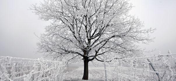 """Selon Frédéric Nathan, ingénieur-prévisioniste à Météo-France, il est """"inutile de s'inquiéter démesurément de la portée de la vague de froid actuelle : il s'agit d'un cas d'école"""". © REUTERS."""