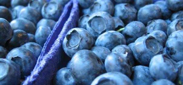 Sur 40 fruits et légumes, les myrtilles ont été classées comme les plus riches en antioxydants. © Brx0 via Flick's