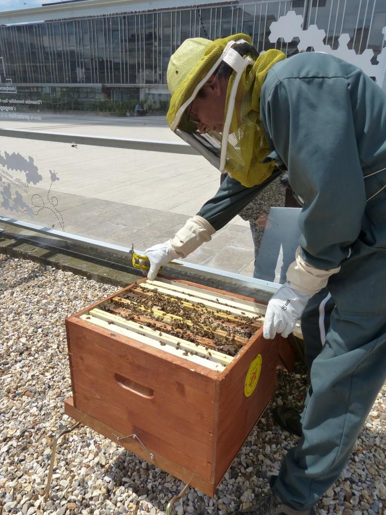 Philippe Prat, apiculteur référent du rucher de la tour Montparnasse. ©Bénédicte Lutaud