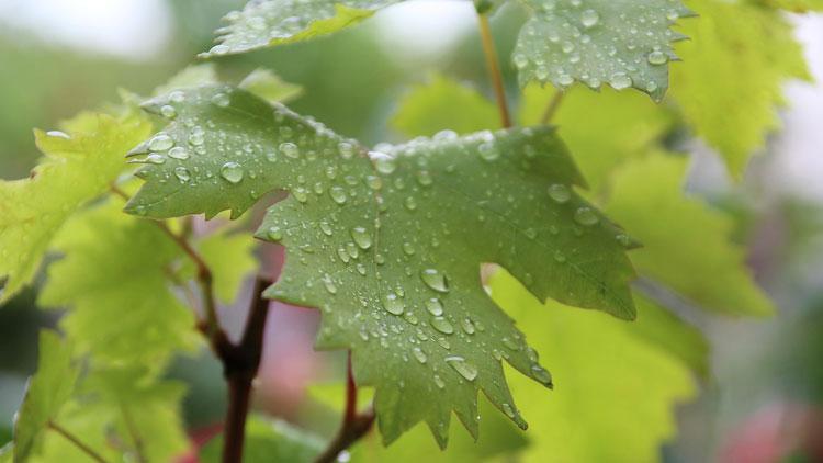 arbre, eau, feuille