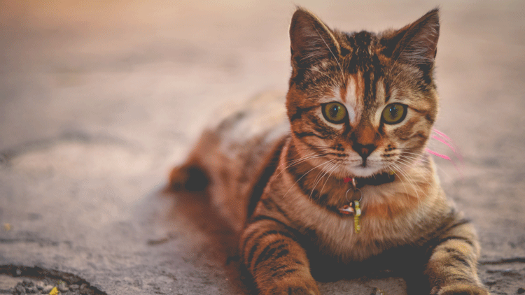 Chats, animaux