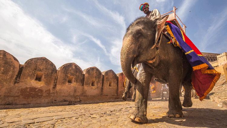 éléphant, animaux,