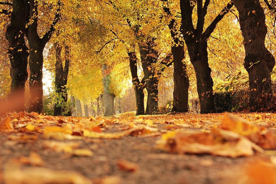 Équinoxe : voilà pourquoi l'automne tombe ce 22 septembre