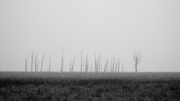 lugubre, brouillard