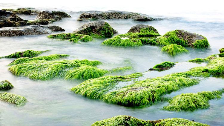 algue, mer, océan