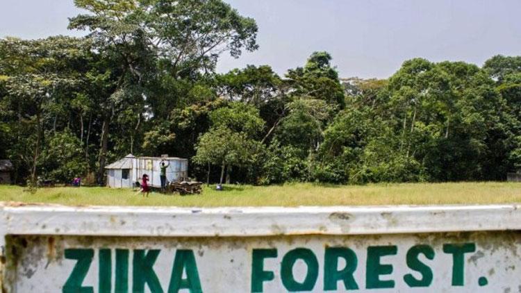 zika, forêt