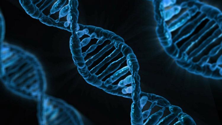 ADN, génies