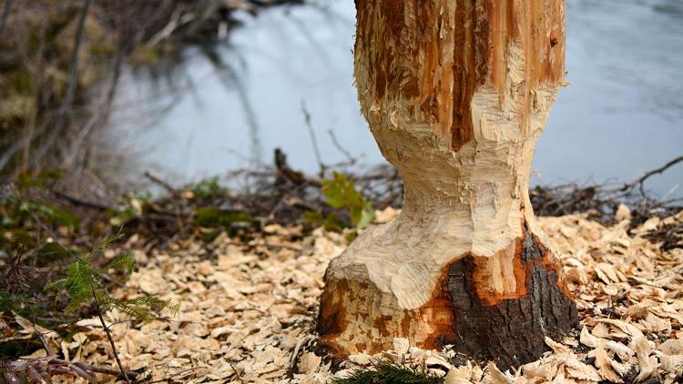 Les planches en bois sont-elles plus hygiéniques que celles en PVC ?