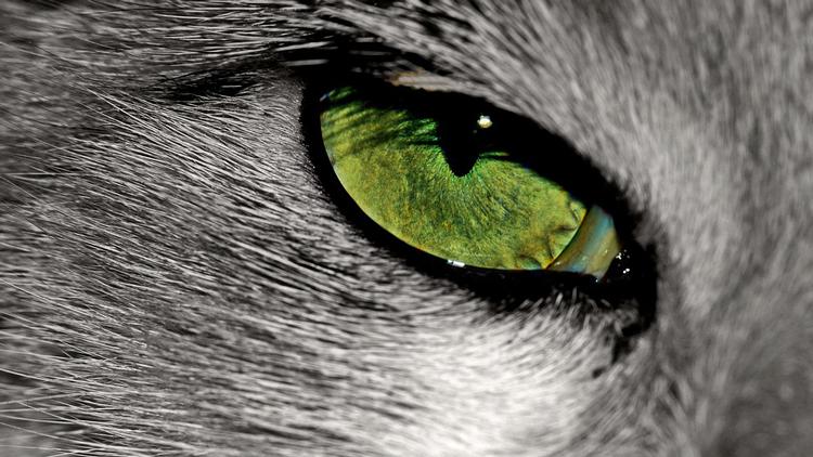 Comment sait-on si les animaux voient les couleurs ? - Ça m'intéresse